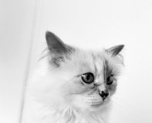 Karl Lagerfeld's cat Choupette is the subject of a new Book
